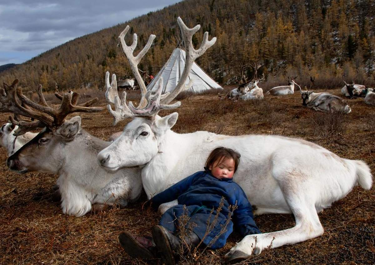 смешные картинки про природу севера начало рассветать самое